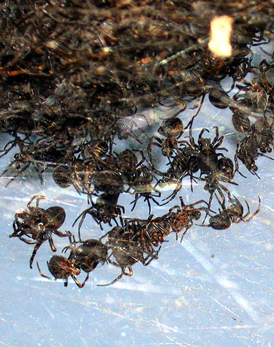 a-nightmare-of-spiders.jpg