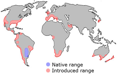 How To Identify The Argentine Ant Linepithema Humile Myrmecos Blog - Map of where fire ants are found in the us