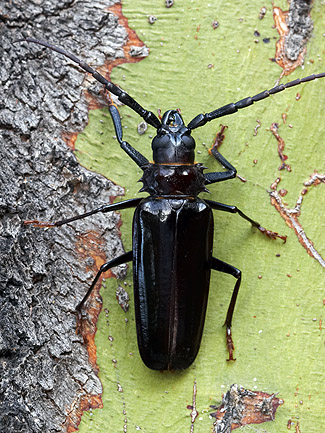 friday beetle blogging a -#main