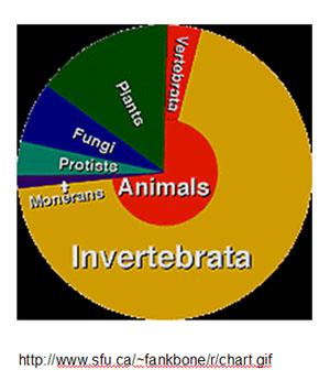 invertebrata1