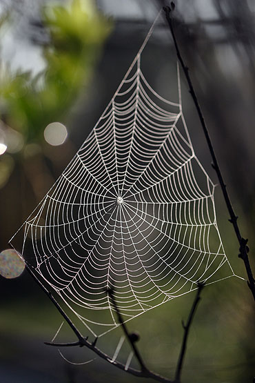 morning is the best time to photograph spider webs