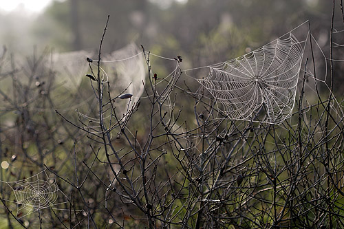 more webs in the scrub