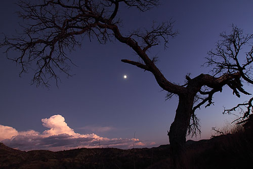 Moonrise in Sycamore Canyon